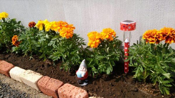 お花が増えました!!